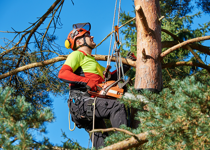 Entreprise forestière pour le débardage de bois