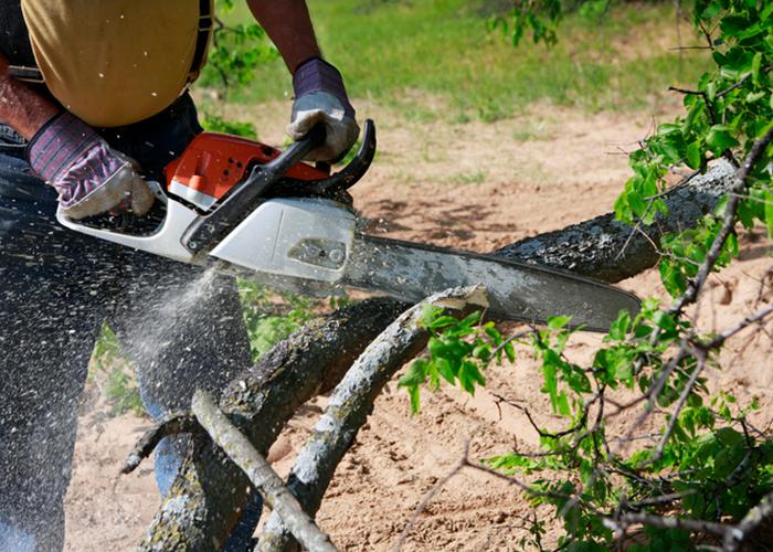 Entreprise pour abattre vos arbres en toute sécurité