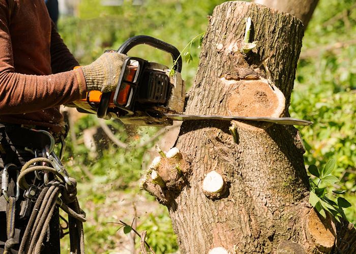 Exploitation forestière pour vos travaux d'élagage