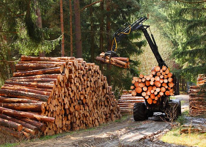 Travaux de débroussaillage forestier